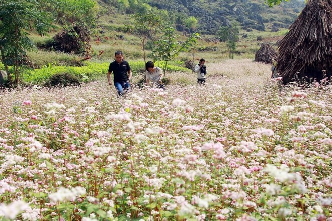 1st buckwheat festival opens in Ha Giang