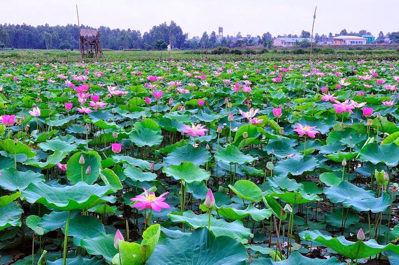 visiting flower villages in dong thap muoi hinh 0