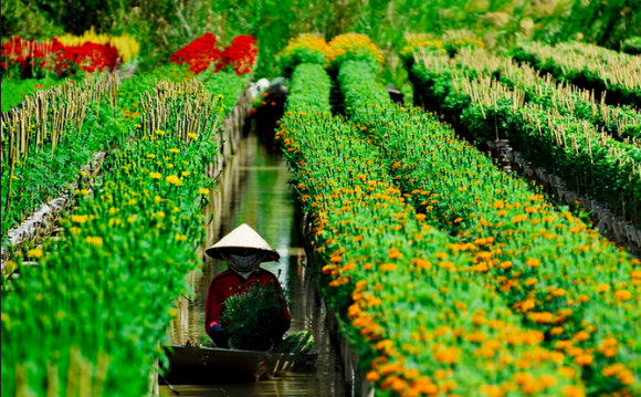 visiting flower villages in dong thap muoi hinh 1