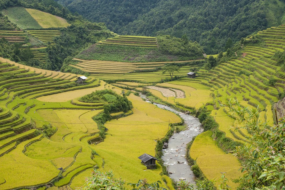 terraced rice fields in mu cang chai hinh 0